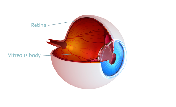 Retina, vitreous body eye, surgery vienna